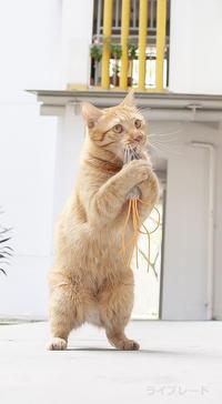 ご近所猫 2019.02.06 - Rayblade Photos