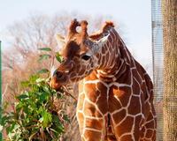 在庫から~埼玉県こども動物自然公園で~ - 星の小父さまフォトつづり