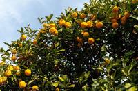 柚子 - 彩りの軌跡