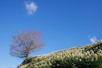 千早赤阪村スイセンの丘 - ぶらり休暇
