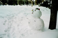 雪だるまも受難の大寒波 - 照片画廊