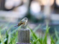 谷戸山公園 - Bird Healing