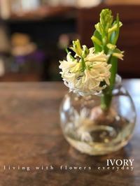 """""""最後にスナップ"""" -  Flower and cafe 花空間 ivory (アイボリー)"""