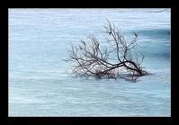 氷上の木 - Desire