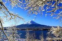 31年2月の富士(5)桜の木の雪の花と富士 - 富士への散歩道 ~撮影記~