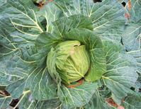 ポタジェで野菜が育つ姿を見よう! - 神戸布引ハーブ園 ハーブガイド ハーブ花ごよみ