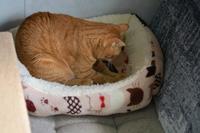 おニューなベッド#14 - Black Cat Moan