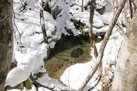 イワナ渓に冬 - きのこ・花・イワナ遊悠学
