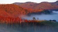 朝霧が晴れて白樺純林帯に朝陽が射し込んで来た - 『私のデジタル写真眼』