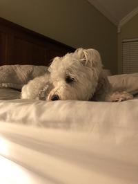 ベッドで待ち構えるココたん - ココのこころぐ