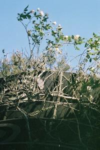 ✿冬の薔薇 - ✿happiness✿