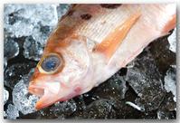 戸毎目張/トゴットメバル〜オキメバルなどとも呼ばれます〜 - 魚屋三代目日記