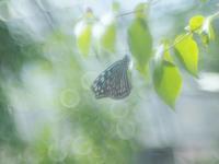 花ちょう館の蝶たちラスト - 光の音色を聞きながら Ⅳ