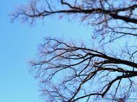 冬樹 - のーんびり hachisu 日記