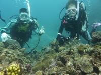 うねりが・・・~糸満近海ファンダイビング&体験ダイビング~ - 沖縄本島最南端・糸満の水中世界をご案内!「海の遊び処 なかゆくい」