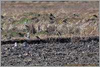 スズメがいっぱい - 野鳥の素顔 <野鳥と日々の出来事>