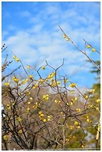 透明な黄色 -  one's  heart