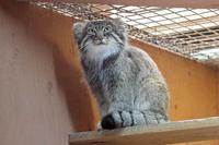 緊迫!グルーシャ&ロータス(埼玉県こども動物自然公園) - 続々・動物園ありマス。