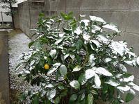雪の土曜日 - マイニチ★コバッケン