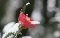 雪の朝 - ネコと裏山日記
