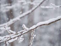 越冬トンボ観察-18雪とホソミオツネントンボ - オヤヂのご近所仲間日記