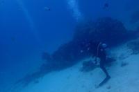 19.2.9のんびりビーチへ - 沖縄本島 島んちゅガイドの『ダイビング日誌』