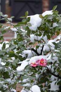 雪を被って - 今日の空+α2