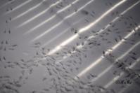 雪の後 / after snowing - Seeking Light - 光を探して。。。