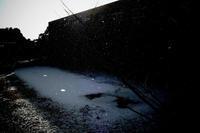 雪舞い 2 - Life with Leica