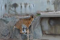 さわちゃんの狩り - 動物園へ行こう