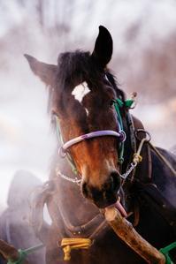 馬の歴史その2馬の進化 - ダートレース倶楽部 Online ブログ版