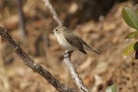 ニシオジロビタキPart3 - 近隣の野鳥を探して