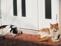 陽だまりの猫たち - ぐりーんらいふ