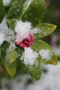 雪の日、、布花、、ぼんやりと、、 - 布の花~花びらの行方 Ⅱ