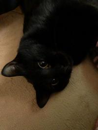 柿くんのおてて - 愛犬家の猫日記
