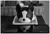 パグ犬 - BobのCamera