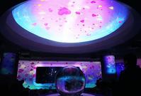 新江ノ島水族館はバレンタインセクシーなハコフグちゃん - エーデルワイスPhoto