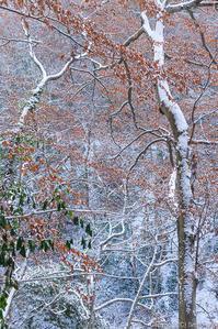 白い森の、秋の名残 - ひつじ雲日記