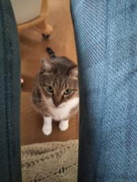 ペット虐待と、家の猫、水餃子はパンパン - ちゃたろうとゆきまま日記
