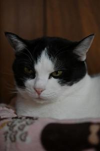 おニューなベッド#15 - Black Cat Moan