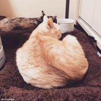 いろりばた - 賃貸ネコ暮らし|賃貸住宅でネコを室内飼いする工夫