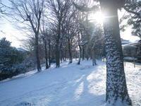 雪が降った翌朝2/10 - つくしんぼ日記 ~徒然編~