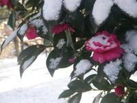 雪が降った翌朝➁2/11 - つくしんぼ日記 ~徒然編~