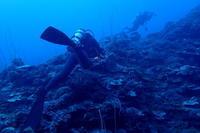19.2.10今日はボートで - 沖縄本島 島んちゅガイドの『ダイビング日誌』
