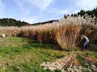 茅葺きに使う茅を刈る農業ボランティ、まかないはカレー〜三井の里〜 - 日々ニコニコ