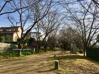 歩こう、歩きつづけよう! - 永楽屋ガーデン    自然を愛する スローライフな庭造り