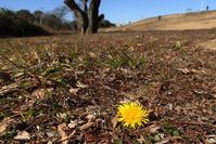 春を想う - TOM'S Photo