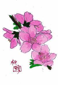 桃の滴(もものしずく) - 鯵庵の京都事情