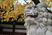 難波 八幡神社 (狛犬 阿形)   兵庫県尼崎市 - 狛犬の尻尾