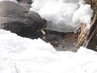 ヤマガラさんの水浴び - ヒロムシ君のお散歩日記